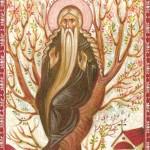 17)Icon of Ven. David
